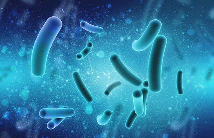 میکروارگانیسم های آب آشامیدنی